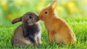 Vücut Dili Tavşan