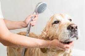 Köpek Bakımı Nasıl Yapılır?