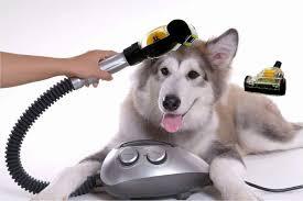 Köpek Tüy Bakımında Dikkat Edilmesi Gerekenler